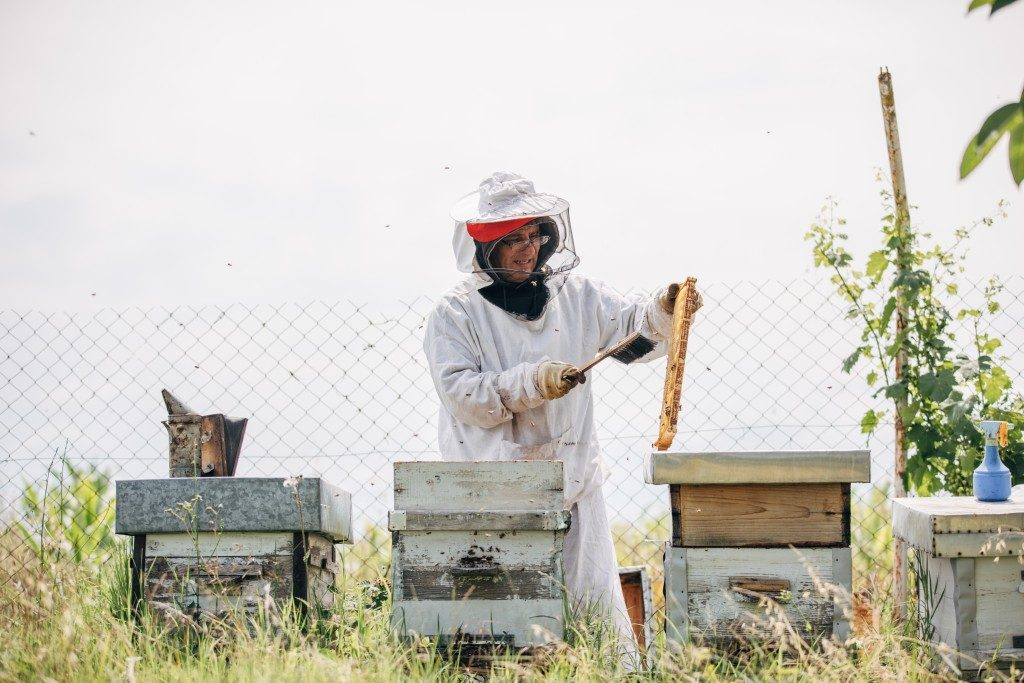bee keeper with hives